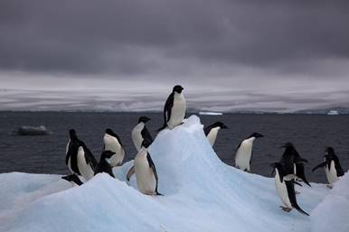 Image result for Penguins in a circle in the snow